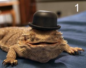 Lizards Wearing Hats 1