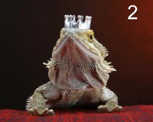 Lizards Wearing Hats 2
