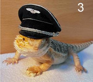 Lizards Wearing Hats 3