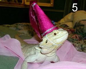 Lizards Wearing Hats 5