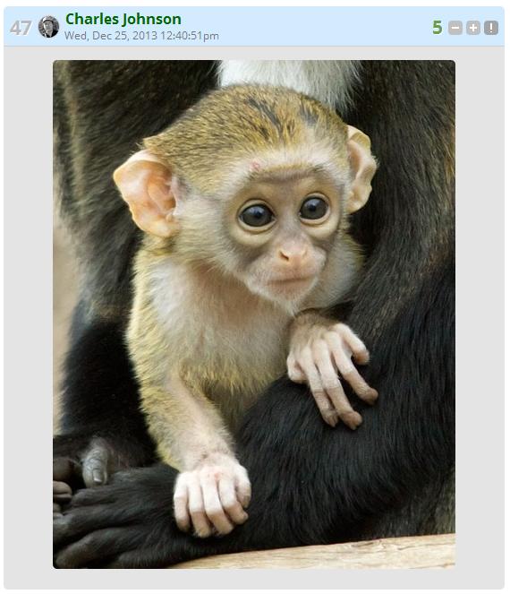 Charles Christmas Monkey